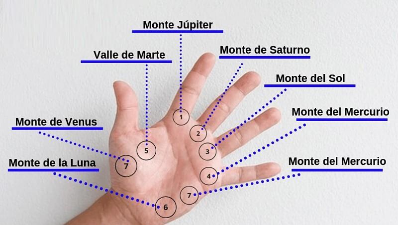Como leer la mano montes