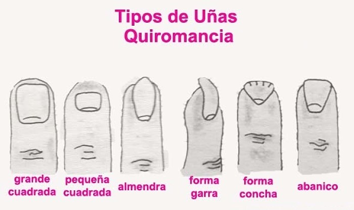 Como leer la mano uñas